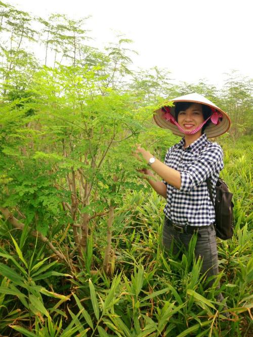 Chị Hường tại khu trồng chùm ngây. Ảnh: MoriS.