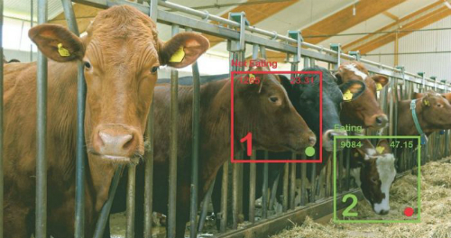 Màn hình giám sát cảnh báo khi nào bò ngưng ăn cỏ, dự báo tình trạng biếng ăn.