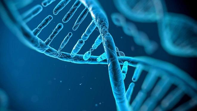 Trong tương lai, việc sắp xếp dữ liệu DNA cá nhân có thể sẽ ngày càng rẻ hơn, nhưng các nghiên cứu sẽ được mở rộng, tạo nhu cầu lớn cho việc sở hữu token các startup trong lĩnh vực này. Ảnh: Internet