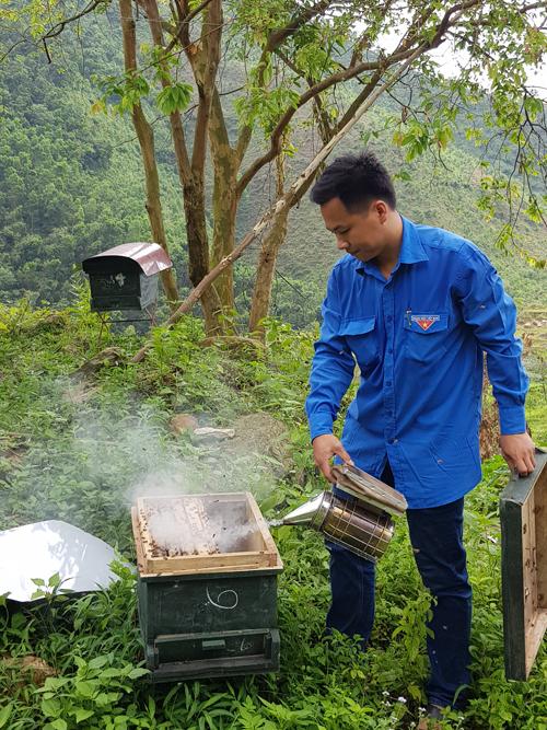 Anh Đỗ Nguyên Đức tâm huyết với nghề nuôi ong.