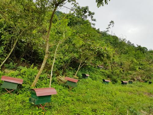 Đàn ong của anh Đức ngày càng nhân rộng.